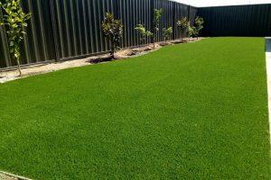 Summer Green Natural Grass